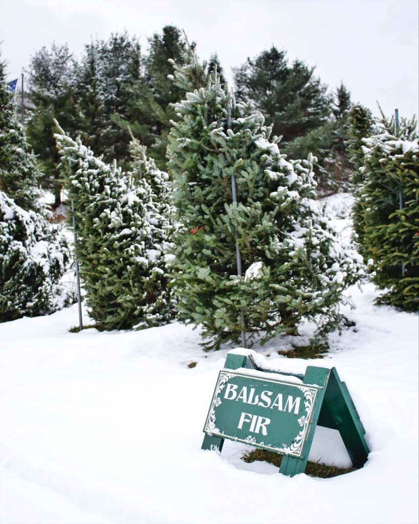 christmas tree farm bennington vermont snow