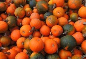 pumpkins vermont fall festival fallapalooza