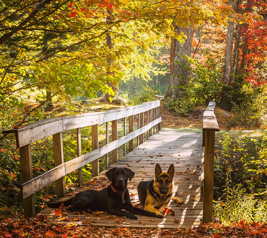 Two pups vs. the Appalachian trail. Woodford, Vermont, ten minutes from downtown Bennington.