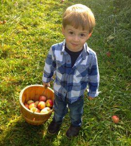 vermont apple picking toddler