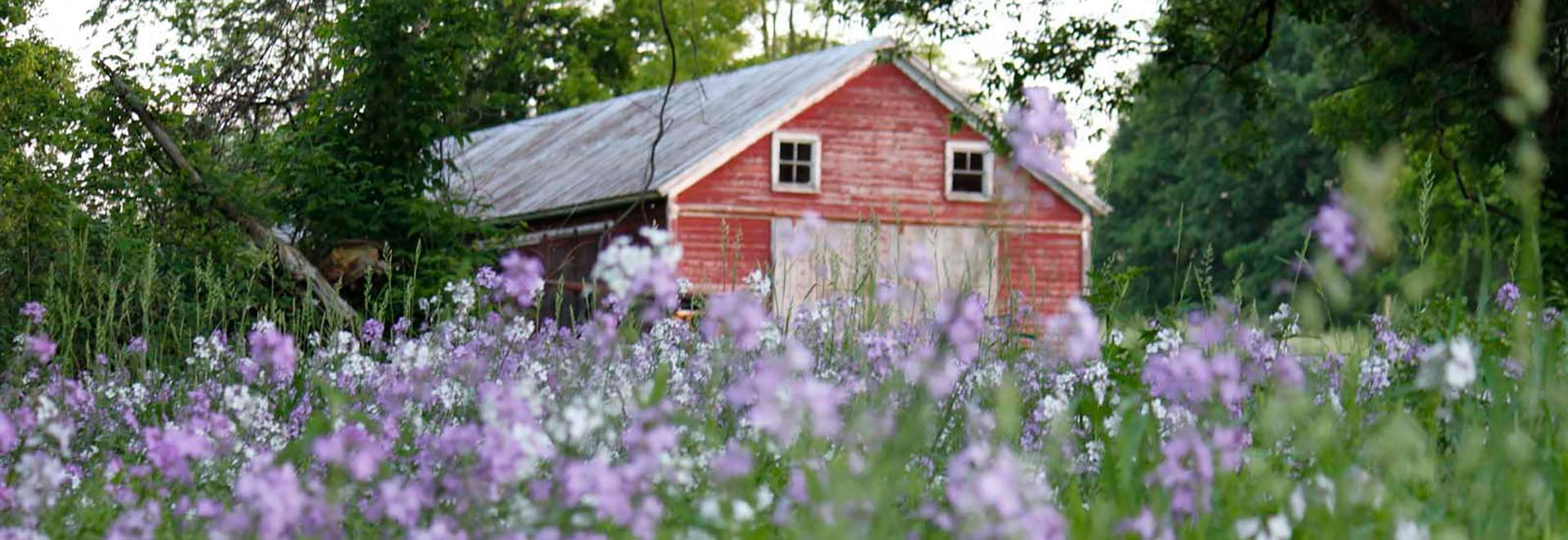 vermont farm red barn purple flowers field