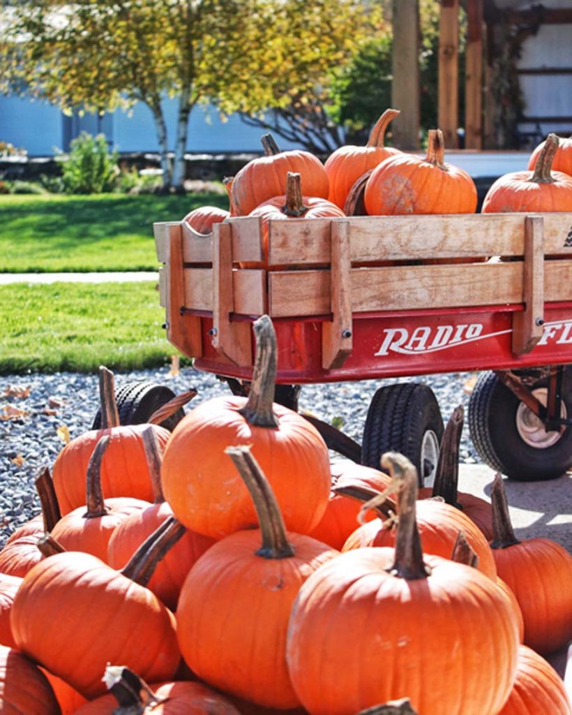 vermont pumpkin patch wagon