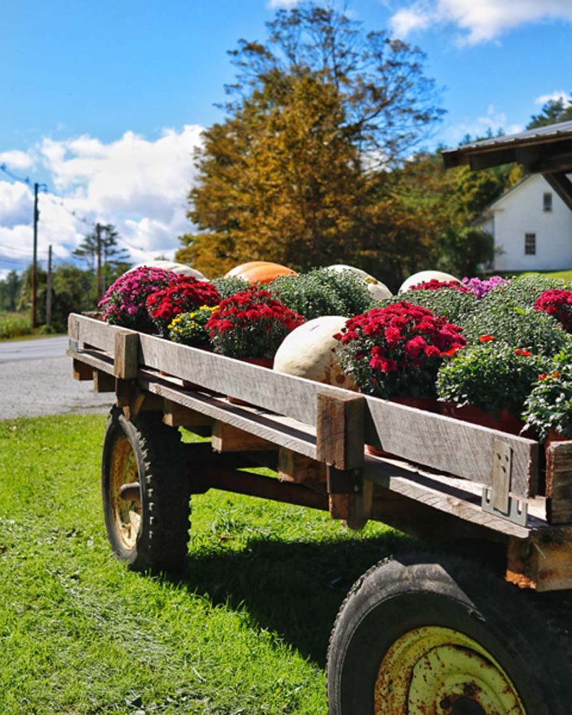 wagon full of mums fall vermont farm
