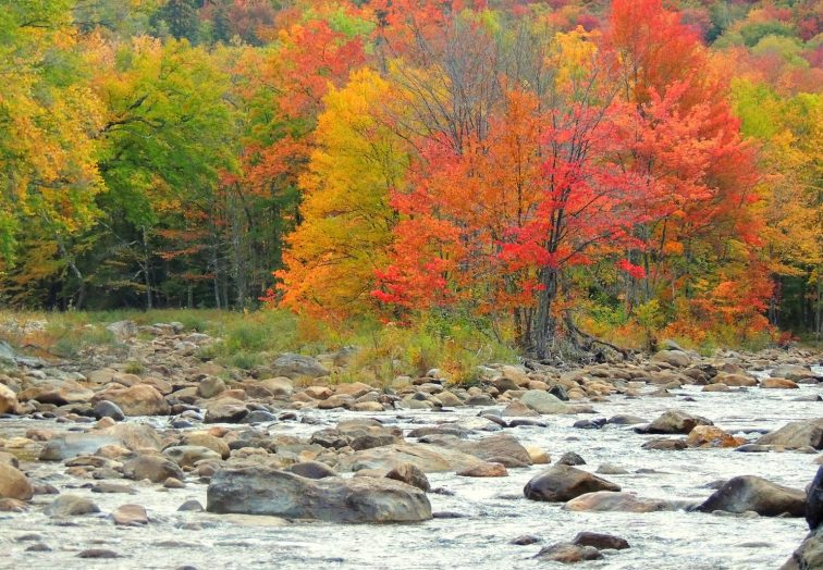 Fall Foliage on a riverbank in Bennington Vermont