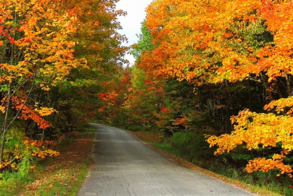 A back road lined with colorful maple trees in Bennington VT