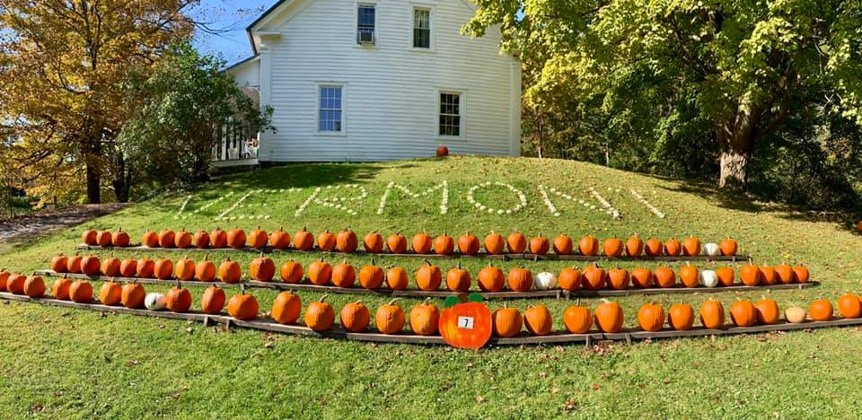 Pumpkins in a row at Armstrong Farm in Bennington VT