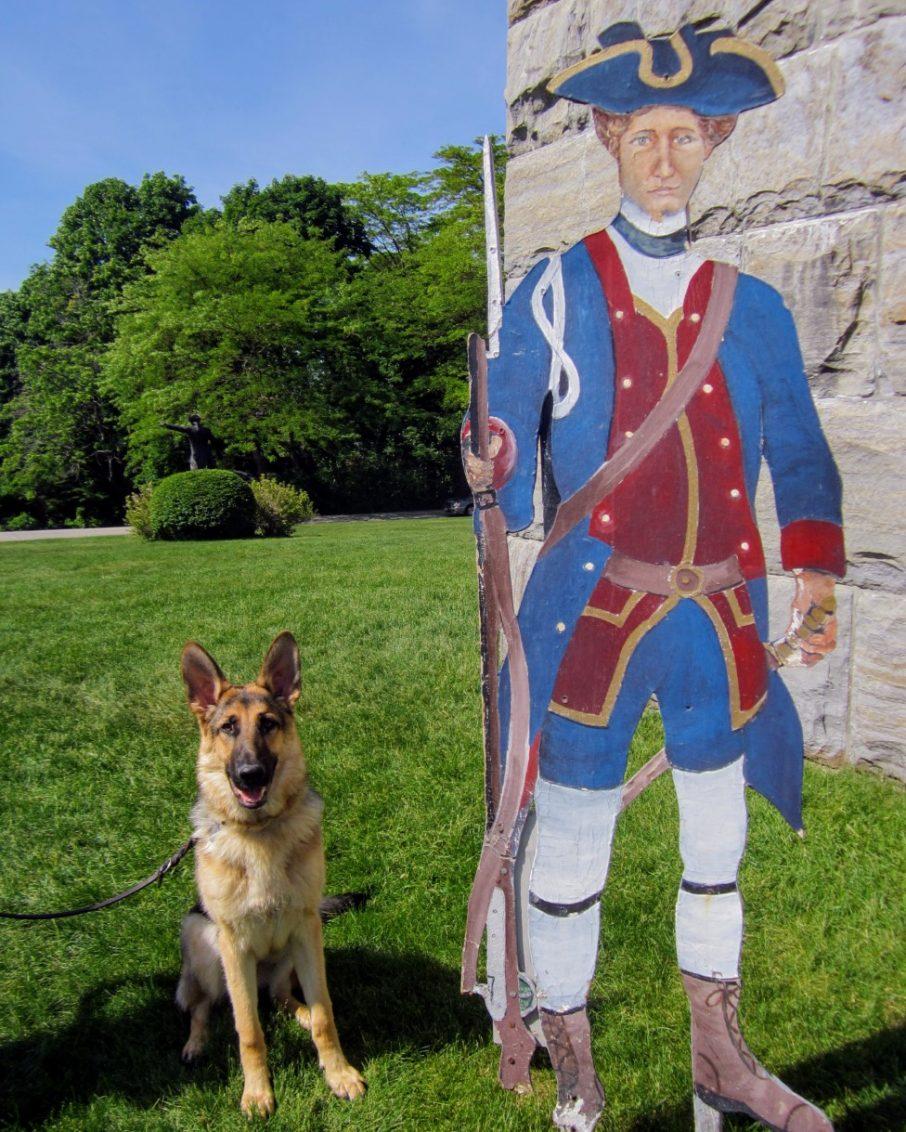 German Shepherd dog near Bennington Monument